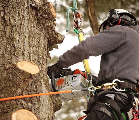 EVERYTHING YOU NEED IN A MADISON TREE CARE SERVICE PROVIDER