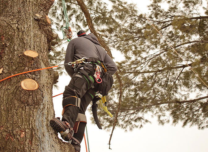 STATE OF THE ART EQUIPMENT REASONABLE RATES FOR QUALIFIED MADISON TREE CARE